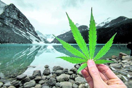 Banff bud weathers mellow tourism season